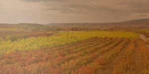 paisaje-rioja-vinedos